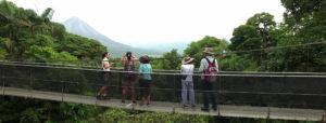 Jungle, Rainforest & Beach Combo