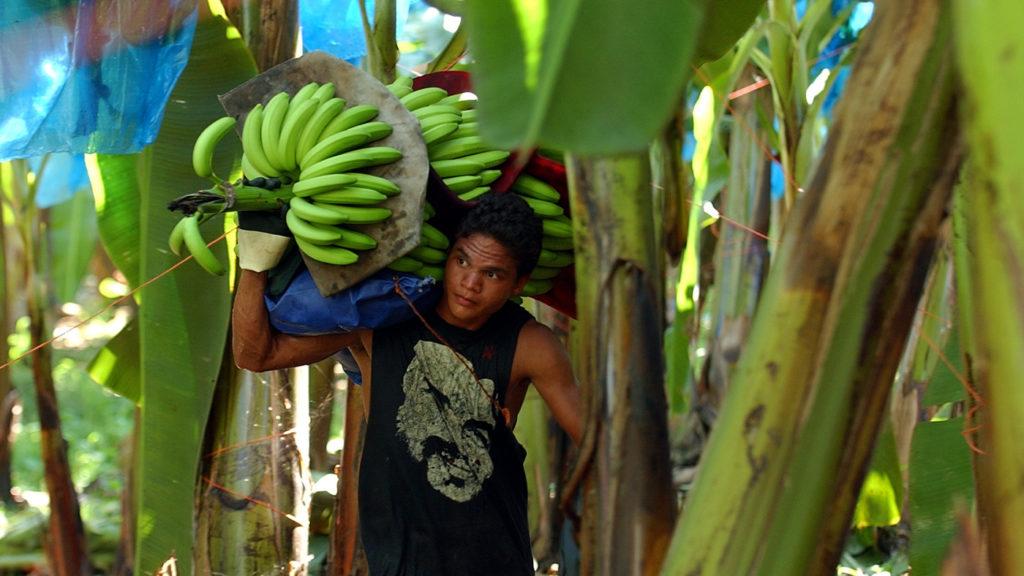 Limon Costa Rica